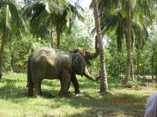 Elephants in WRRC sanctuary.