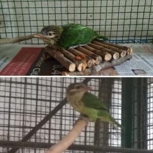 Bird Rescue in Bangalore