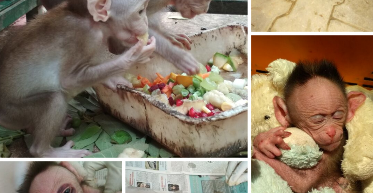 Rescue and Rehab of baby monkey